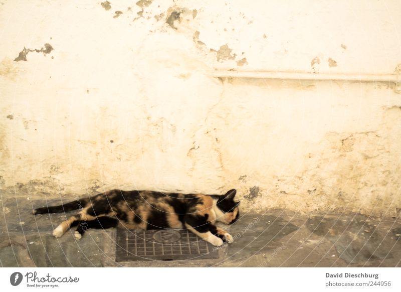Cat Animal Calm Relaxation Wall (building) Wall (barrier) Brown Sleep Break Pet Siesta Comfortable Love of animals Oversleep Goof off Free-living