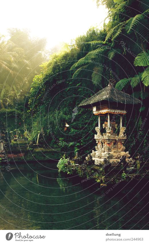 Temple in water with rainforest in the background Environment Nature Landscape Plant Water Summer Beautiful weather Garden Park Virgin forest Indonesia Bali