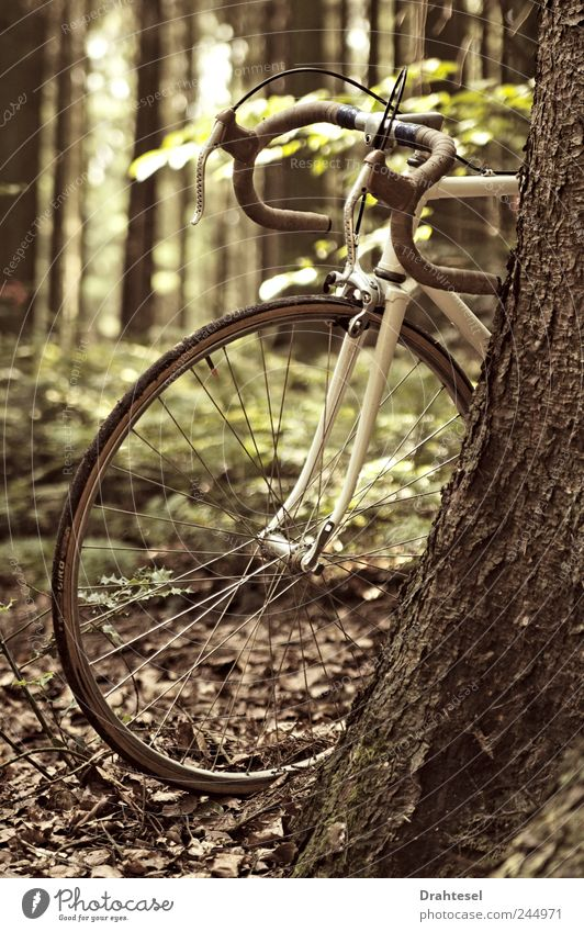 Nature White Tree Joy Forest Freedom Style Brown Bicycle Uniqueness Hip & trendy
