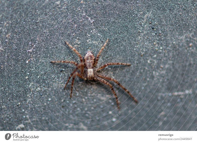 Close-up of a spider Garden Nature Animal Park Street Spider Creepy Small Fear Romania Valiug arachnid arachnophobia botanical Carnivore Insect predator Spooky