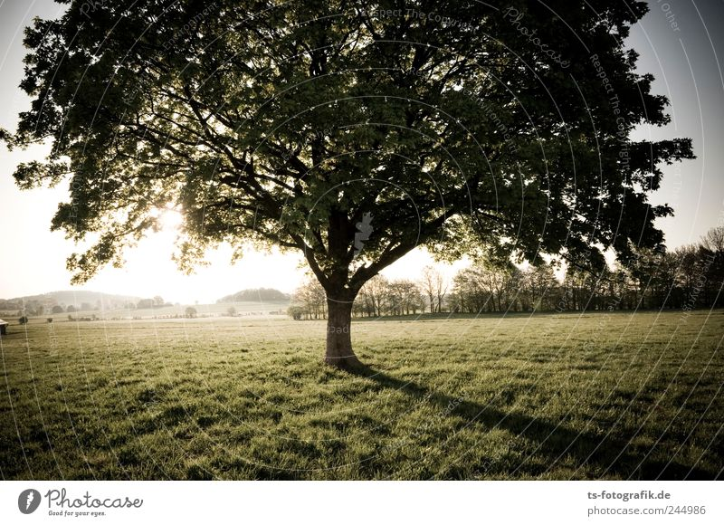Nature Green Tree Vacation & Travel Plant Summer Leaf Environment Meadow Landscape Freedom Grass Air Park Horizon Earth