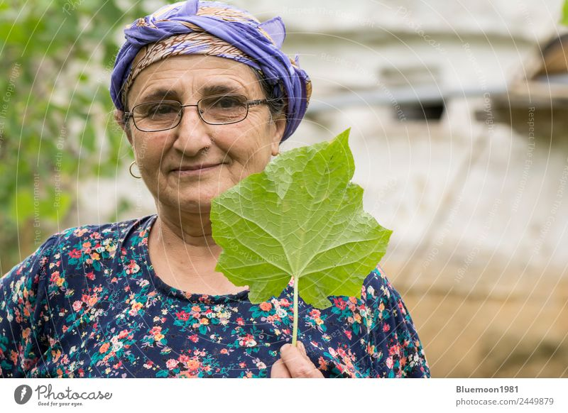 Portrait of a senior Muslim woman holding cucumber plant leaf by hand Vegetable Nutrition Eating Organic produce Vegetarian diet Lifestyle Style Healthy Eating
