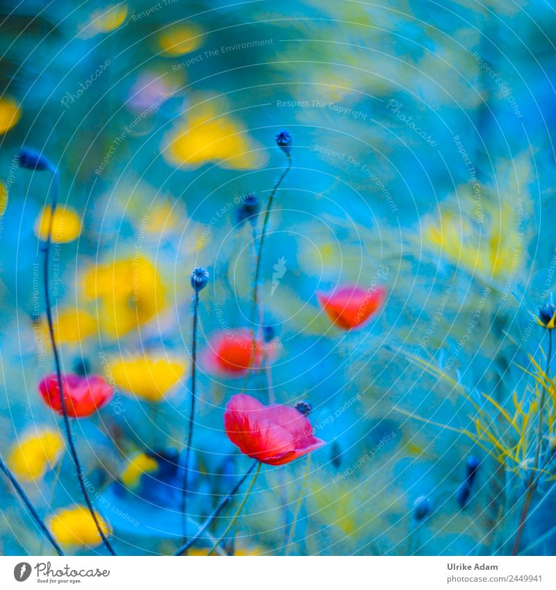 Abstract - Wildflower meadow - Nature Elegant Style Design Beautiful Life Swimming pool Decoration Wallpaper Image Feasts & Celebrations Plant Sunlight Summer