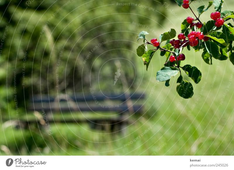 Nature Green Red Plant Summer Leaf Meadow Grass Landscape Environment Empty Growth Bushes Bench Branch Hang