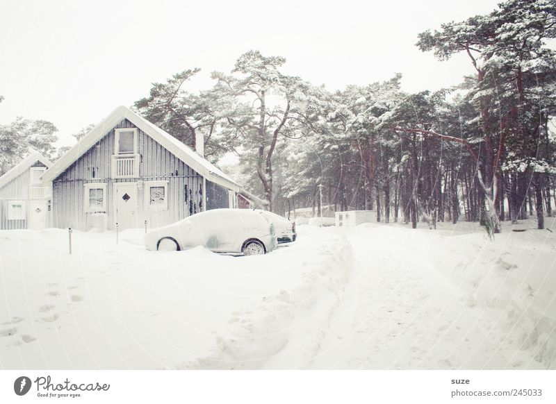 Sky Nature Vacation & Travel White Tree Winter House (Residential Structure) Forest Environment Cold Snow Lanes & trails Bright Car Ice Exceptional