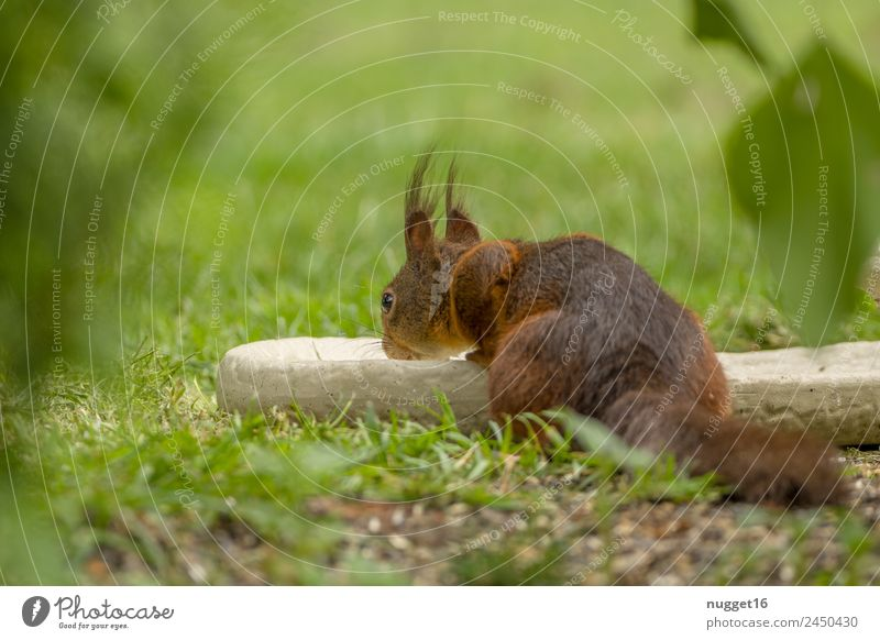 squirrels Environment Nature Plant Animal Sun Spring Summer Autumn Climate Beautiful weather Grass Bushes Garden Park Meadow Forest Wild animal Animal face Pelt