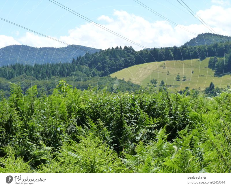 Sky Nature Blue Green Summer Forest Landscape Mountain Movement Going Natural Hiking Free Fresh Bushes Hill