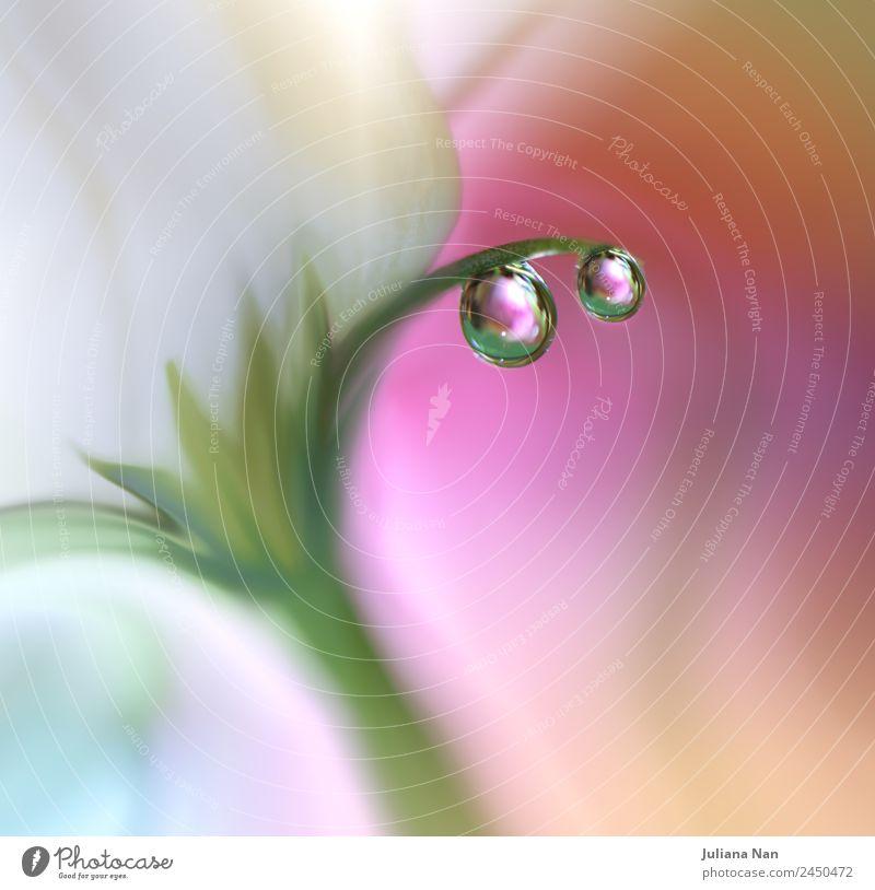 Gentle romantic artistic image. Soft pastel background blur . Lifestyle Elegant Design Art Work of art Nature Water Drops of water Summer Flower Rose