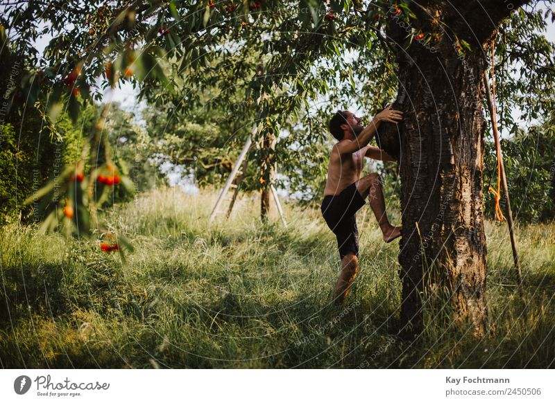 Young man climbs a cherry tree Lifestyle Joy Happy Wellness Well-being Leisure and hobbies Vacation & Travel Trip Freedom Summer Summer vacation Climbing