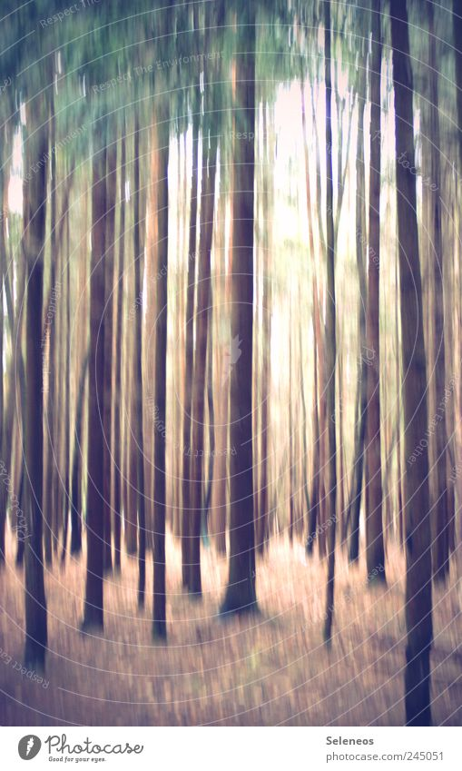 Nature Tree Vacation & Travel Plant Summer Forest Environment Landscape Freedom Bright Line Trip Stripe Abstract