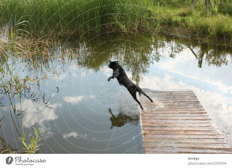 Flight study of dogs in climbing flight Plant Water Sky Pond Pet Dog 1 Animal Flying Brave Life Movement Resolve Joy Joie de vivre (Vitality) Nature