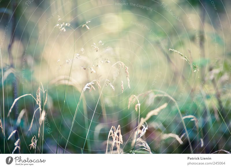 Nature Plant Summer Meadow Freedom Environment Grass Moody Weather Contentment Esthetic Kitsch Mysterious Idyll Beautiful weather Idea