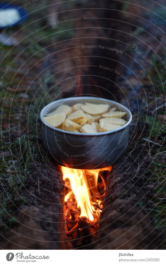 fire in the earth Food Potatoes Dinner Picnic Leisure and hobbies Vacation & Travel Expedition Camping Summer Nature Earth Fire Cooking Fireplace Simple
