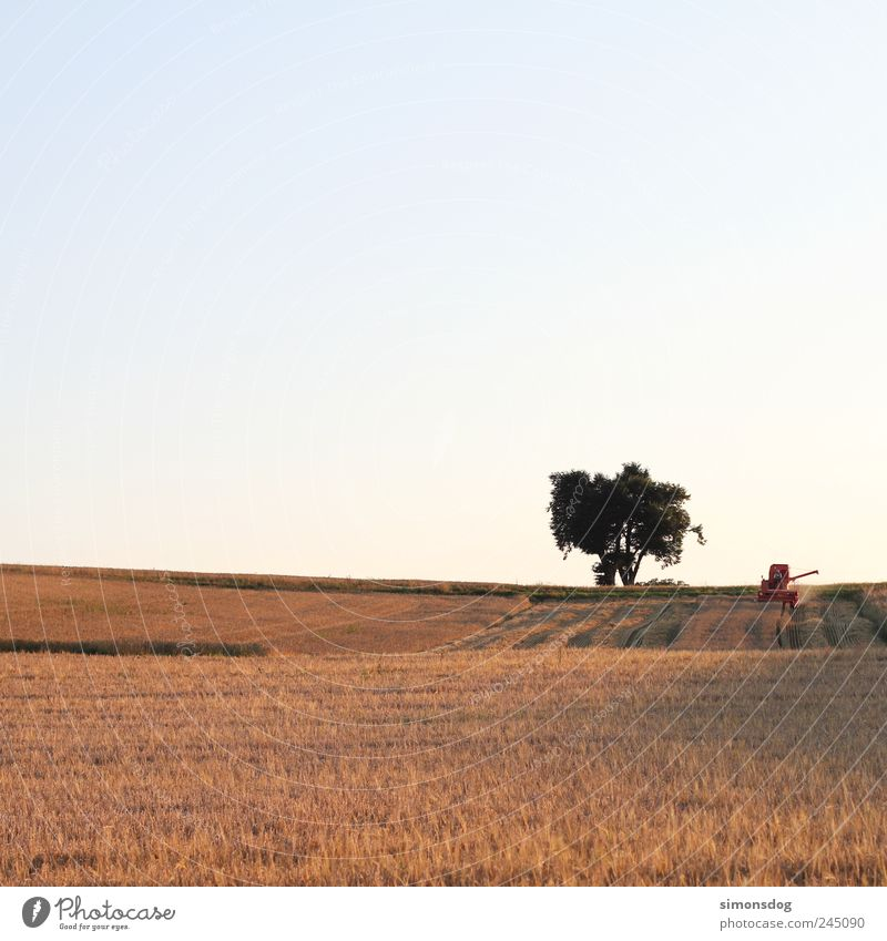 midsummer Landscape Cloudless sky Summer Tree Agricultural crop Field Work and employment Sustainability Natural Energy Idyll Transience Change Grain Combine