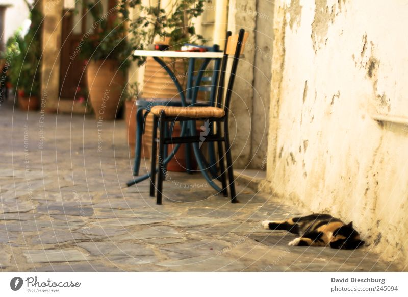 idyllic Summer Animal Cat 1 Brown Calm Indifferent Siesta Chair Table Stone floor Wall (building) Facade Sleep Break Relaxation Colour photo Exterior shot