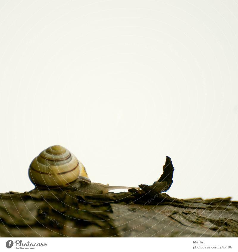 Nature Animal Environment Small Time Natural Cute Snail Crawl Tree bark Slowly Snail shell