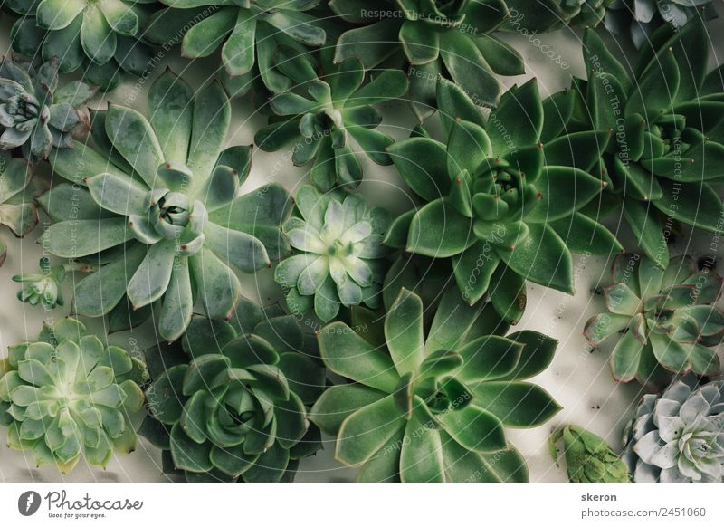 collection of succulents on the windowsill Green Calm Joy Healthy Lifestyle Interior design Style Design Leisure and hobbies Decoration Glittering Elegant