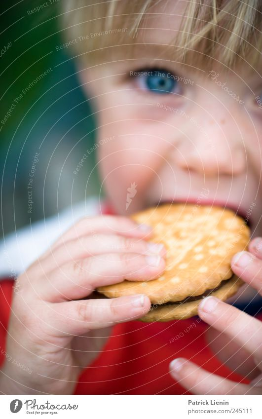 Human being Child Hand Beautiful Eyes Boy (child) Eating Infancy Leisure and hobbies Food Nutrition Fingers Sweet Break Appetite Candy
