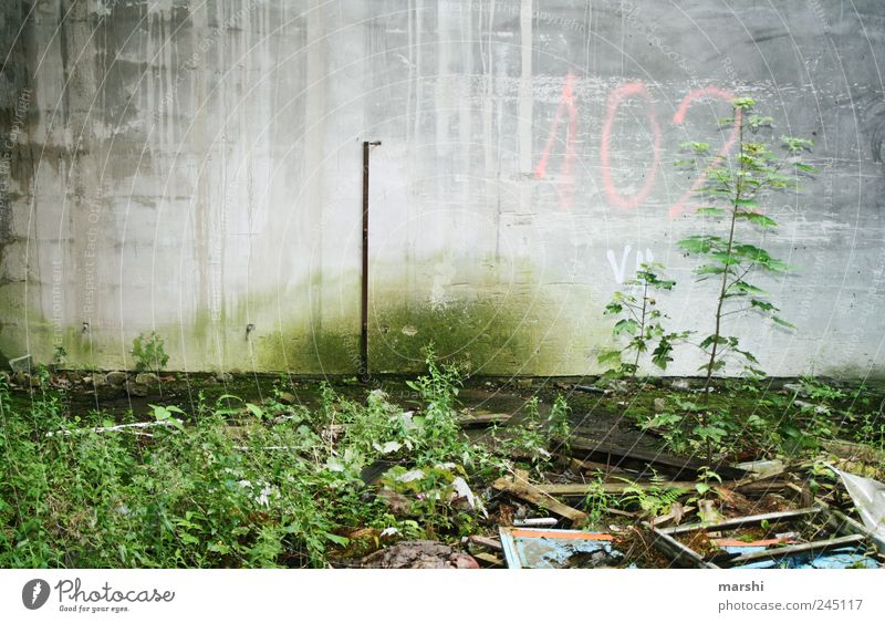 102 Environment Earth Gray Green Plant Wall (barrier) Concrete Gloomy Dirty Trash Verdigris Colour photo Exterior shot