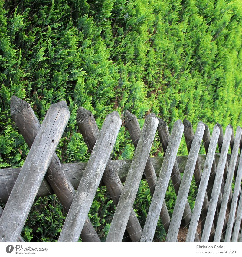 Green Street Wood Garden Brown Back Bushes Square Sidewalk Fence Wooden board Barrier Foliage plant Real estate Garden fence Fence post