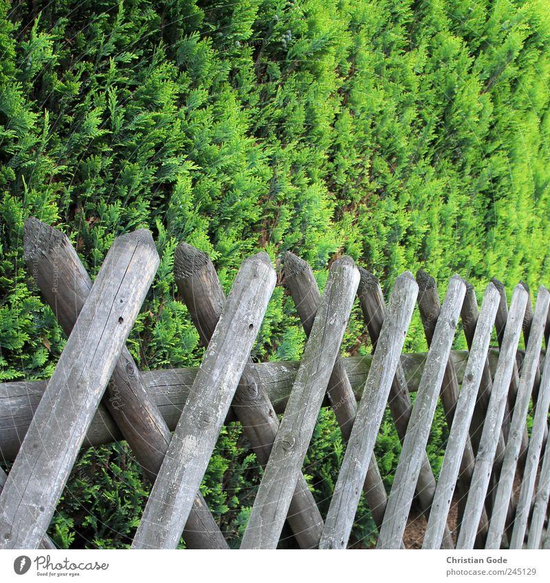 Green Street Wood Garden Brown Back Bushes Square Sidewalk Fence Wooden board Barrier Foliage plant Real estate Garden fence Fence post