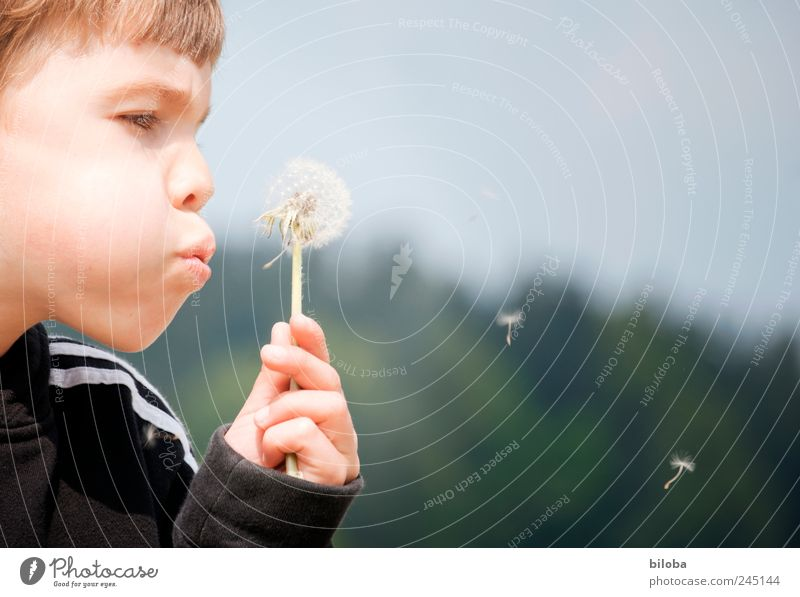 Summer is running out of breath! Human being Masculine Boy (child) Head 1 Dandelion Brown Green Black Blow Seed Hover Exterior shot Copy Space right