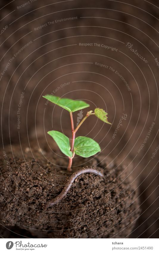 New life - young plant and a worm Vegetable Coffee Money Life Garden Gardening Financial Industry Business Environment Nature Plant Earth Spring Tree Leaf Worm