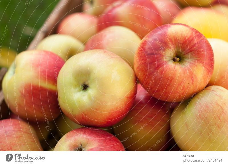 Red and yellow ripe apples Fruit Apple Nutrition Diet Nature Autumn Tree Leaf Container Packaging Wood Old Fresh Delicious Natural Yellow Gold Green Colour