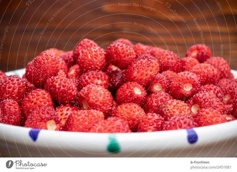 Lots and lots of wild strawberries Fruit Organic produce Vegetarian diet Summer Fresh Red To enjoy Wild strawberry Bowl Strawberry Small Collection Harvest