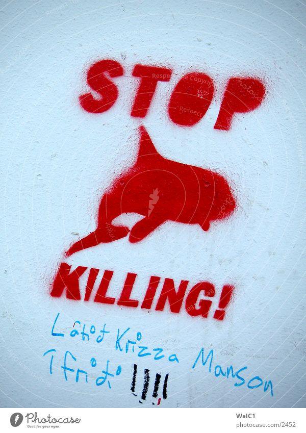 graffiti Iceland Whale Dolphin Communication Europe Graffiti Information killing