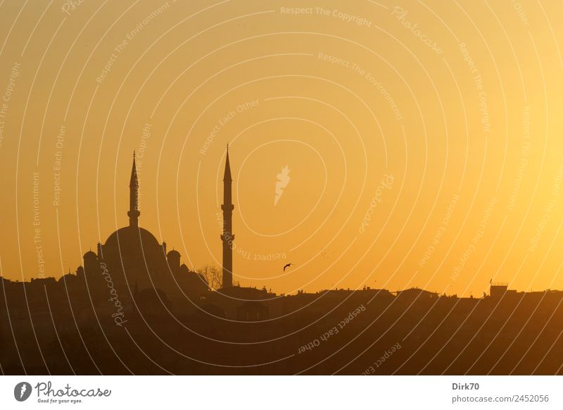 Mosque in Istanbul Vacation & Travel Tourism Far-off places City trip Near and Middle East Culture Cloudless sky Sunrise Sunset Sunlight Spring