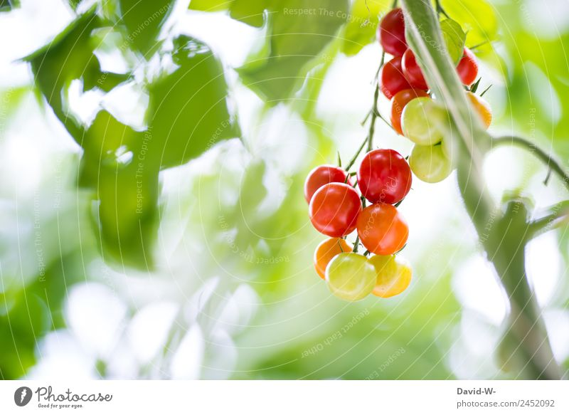 Nature Plant Beautiful Green Red Eating Healthy Environment Health care Food Exceptional Nutrition Elegant Growth Fantastic Climate