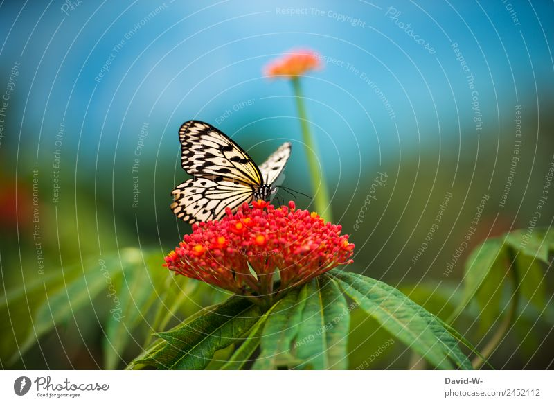 A beautiful summer day Elegant Art Work of art Painting and drawing (object) Environment Nature Landscape Plant Animal Air Sky Summer Climate Climate change