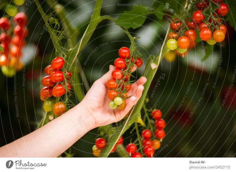 Human being Nature Summer Landscape Hand Red Environment Food Nutrition Weather Beautiful weather Observe Climate Touch Delicious Vegetable