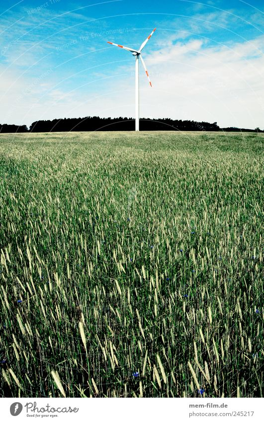 wind turbine behind biomass Wind energy plant Pinwheel Biomass Wheat Field Renewable energy Electricity Energy Energy industry Landscape Deface Brandenburg
