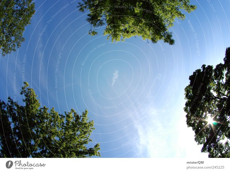 Summer in the park. Environment Nature Landscape Plant Earth Freedom Sky Green Blue Blue sky Treetop Park Above Pattern Summery Sun Solar Power Sunbathing