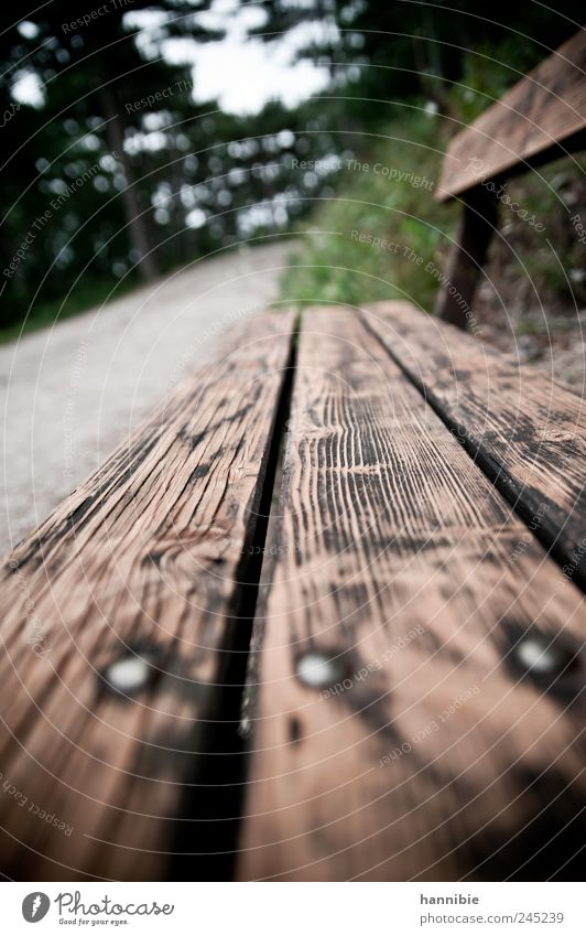Nature Old Green Loneliness Forest Relaxation Wood Gray Lanes & trails Park Brown Wait Hiking Sit Break Bench