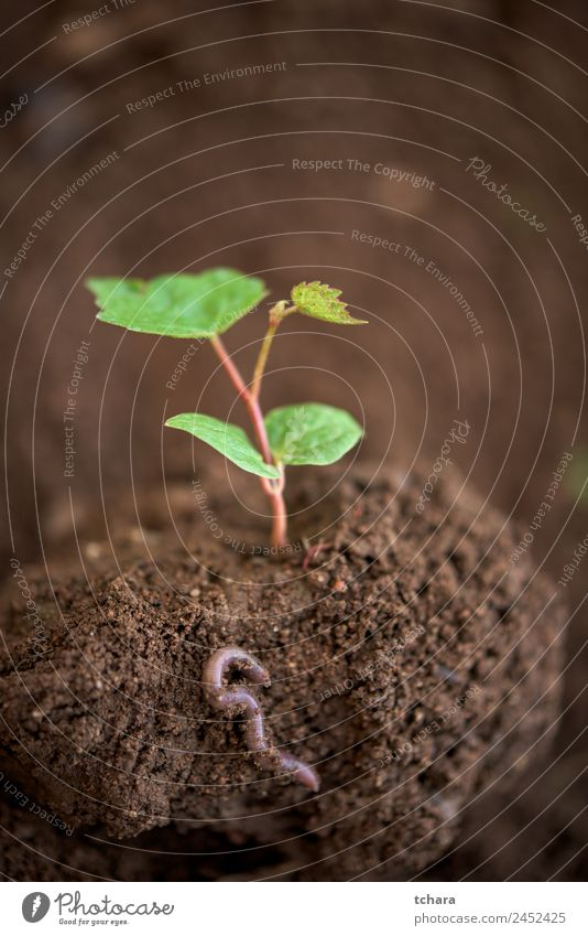 New life Vegetable Coffee Money Life Garden Gardening Financial Industry Business Environment Nature Plant Earth Spring Tree Leaf Worm Growth Fresh Small