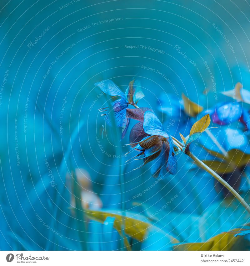 Christrosen - Dream in blue Elegant Style Design Beautiful Wellness Life Harmonious Relaxation Decoration Wallpaper Card Feasts & Celebrations Valentine's Day