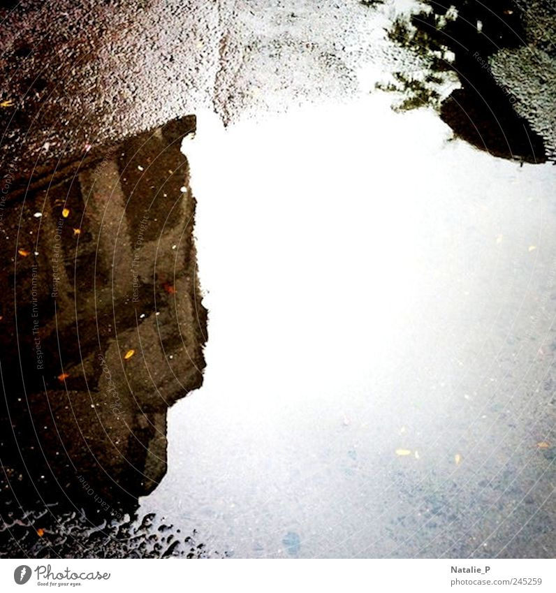 View I Water Bad weather House (Residential Structure) Wet Sadness Puddle Subdued colour Exterior shot Detail Deserted Copy Space right Reflection