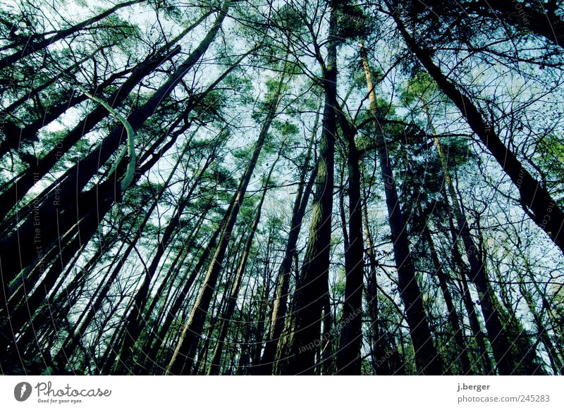 BLICKWINKEL Environment Nature Landscape Plant Sky Summer Tree Forest Exceptional Long Blue Brown Green Black Deciduous forest Wood Distorted Colour photo