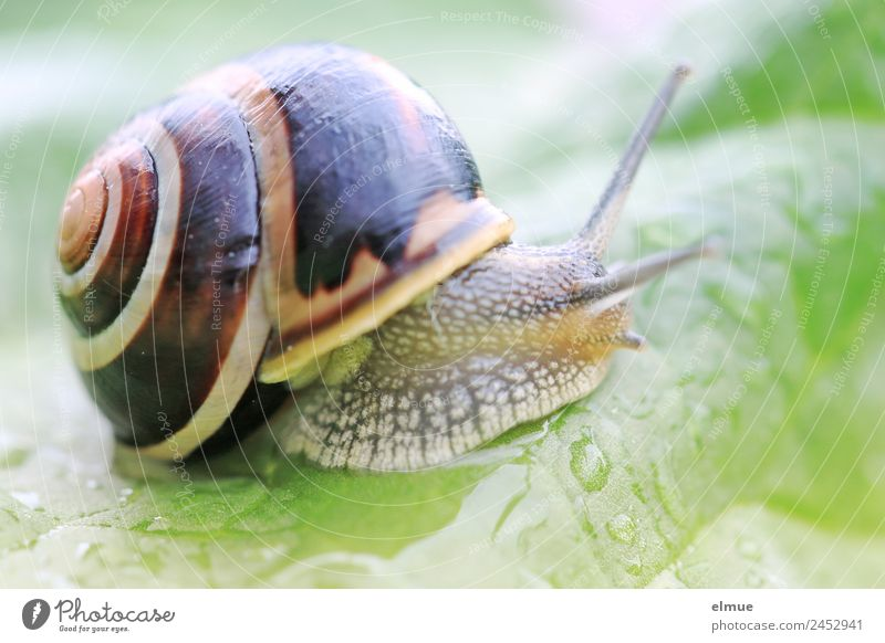 Garden snail XVI Leaf Wild animal Snail Snail shell Goggle eyed Feeler Spiral Suck-up Screw thread Retreat Slimy Willpower Brave Determination Protection Serene