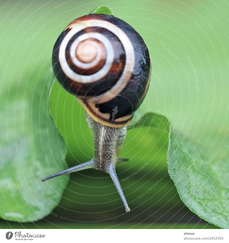Garden snail IX Leaf Wild animal Snail Snail shell Feeler Goggle eyed Spiral Screw thread Suck-up Curiosity Retreat hanging party Hang Slimy Optimism Brave