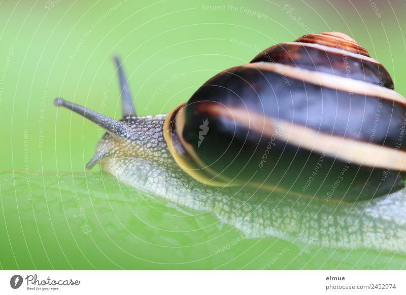 Nature Lanes & trails Movement Wild animal Power Speed Target Network Serene Brave Caution Effort Snail Spiral Willpower Patient