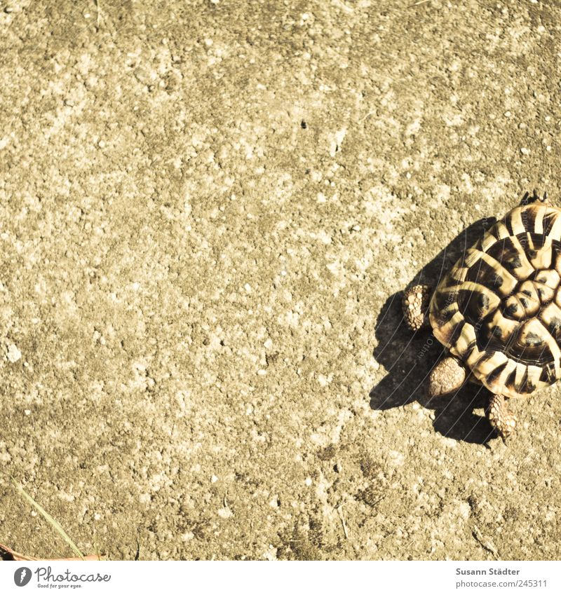 lawn mower Animal Pet Hunting Turtle Tortoise-shell Shell Walking Toad migration Concrete floor To go for a walk Going Subdued colour Day Light Shadow