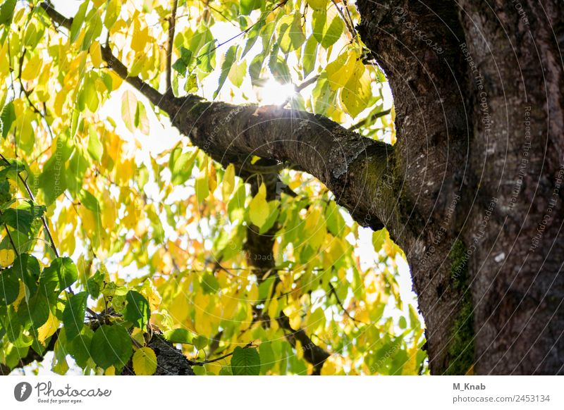 Sunlight shines through leaves in the tree Environment Nature Landscape Plant Animal Spring Summer Weather Beautiful weather Tree Leaf Garden Forest Breathe