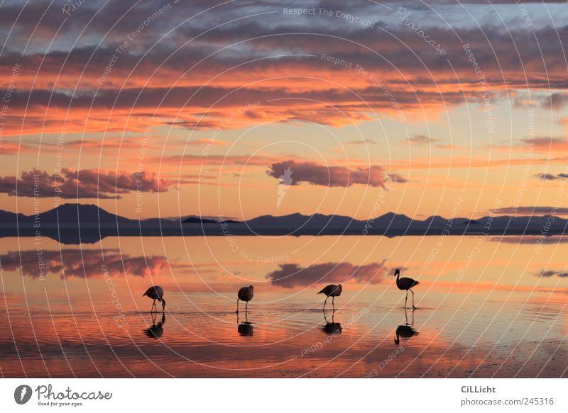 Flamingo Formation I Environment Nature Landscape Water Sky Clouds Sunrise Sunset Lakeside Desert Animal Wild animal 4 Group of animals Esthetic Authentic