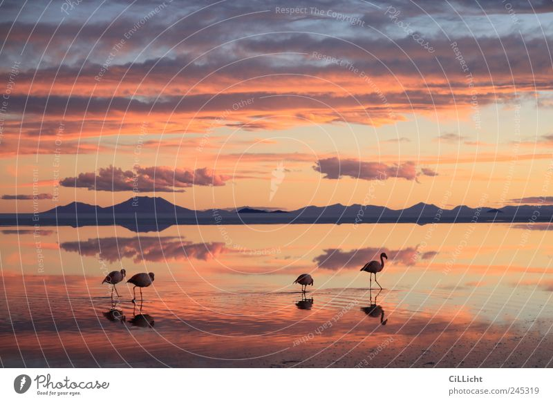 Nature Water Red Animal Yellow Landscape Environment Pink Esthetic Authentic Desert Group of animals Exceptional Wild animal Flamingo Bolivia