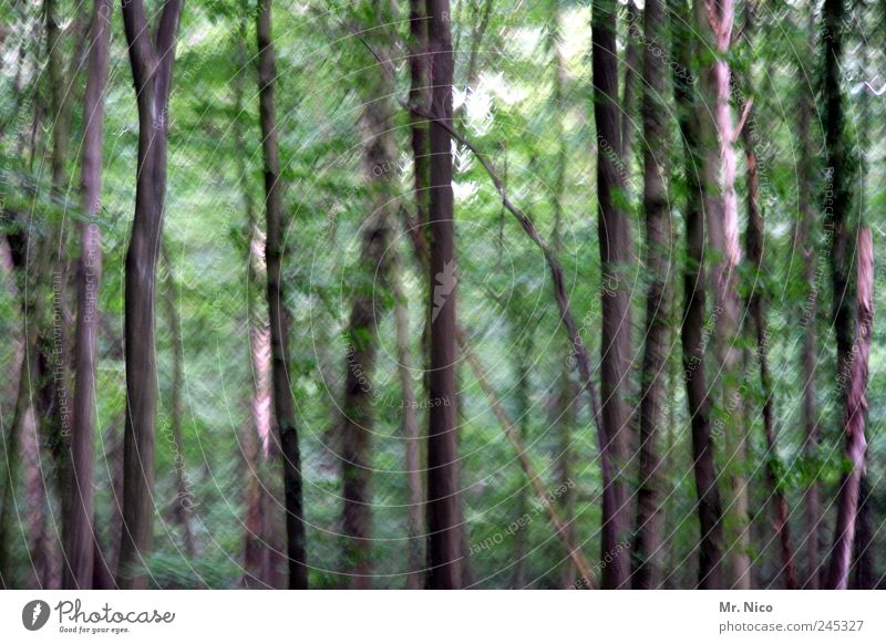 Nature Green Tree Leaf Loneliness Forest Environment Landscape Wood Wind Branch Painting and drawing (object) Seasons Bizarre Forestry Agitated
