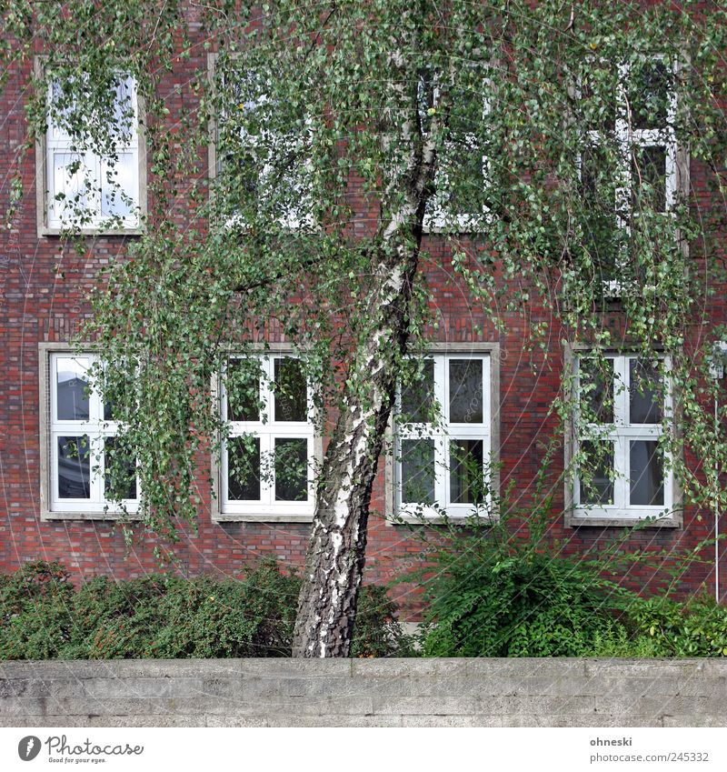 Green Tree House (Residential Structure) Wall (building) Window Wall (barrier) Building Facade Growth Bushes Manmade structures Foliage plant Birch tree
